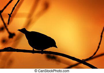 Vogelschwalbe auf einem Zweig