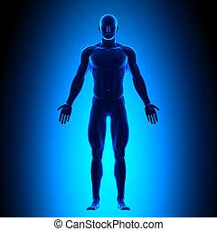 Voller Körper - Vorderseite - blaues Eis.