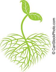 wachsen, pflanze