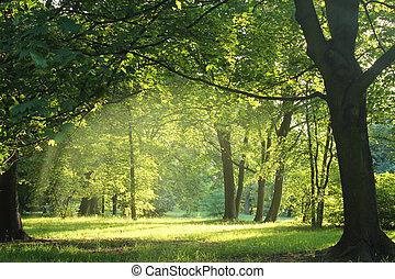 wald, sommer, bäume