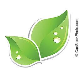 wasser, grün, vektor, blatt, droplets.