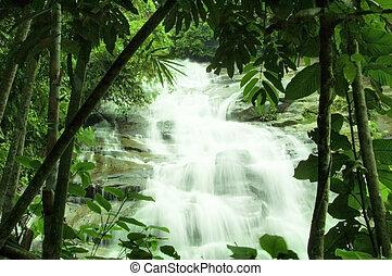 Wasserfälle im grünen Wald.