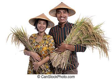 weiblicher asiat, hand, reis, korn, paddy, fotoapperat, landwirt, lächeln, mann, traditionelle