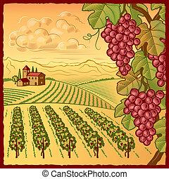 Weingartenlandschaft