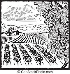 Weingartenlandschaft schwarz und weiß