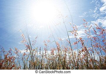 Wilde Blume, Gras und Himmel