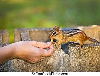 Wildtiere füttern