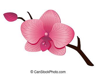 Wunderschöne rosa Orchidee