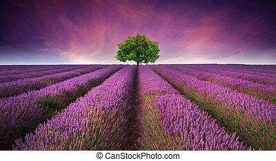 Wunderschönes Bild von Lavendel Feld Sommer Sonnenuntergänge Landschaft mit einem Baum am Horizont kontrastierende Farben.