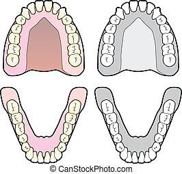 Zahnkarte