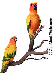 Zwei Eis Papageien auf einem natürlichen Zweig