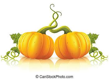 Zwei orange Kürbisse mit grünen Blättern