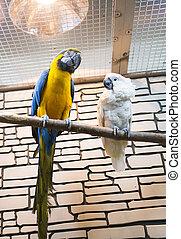 Zwei Papageien sitzen auf einer Zweigstelle im Zoo