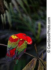 Zwei rote Papageien sitzen auf einem Ast