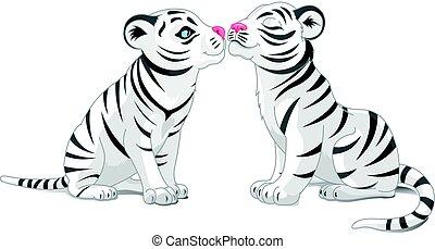 zwei, weißes, liebe, tiger