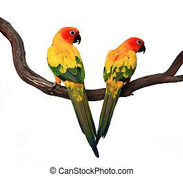 Zwei wunderschöne Sonnenbeeren auf einem Zweig
